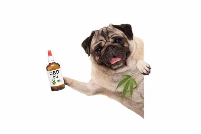 CBD for pets, CBD oil for pets