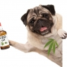 CBD For Pets: Is it Safe?