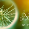 What is Cannabidiol (CBD)?