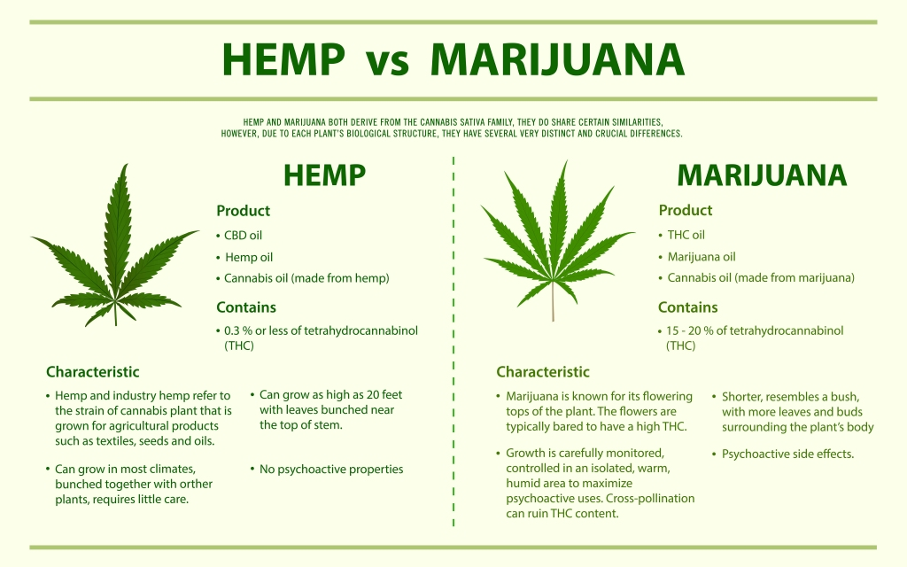 Hemp vs marijuana, Difference between hemp and marijuana, CBD 101