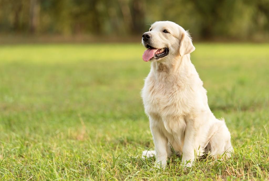 CBD for pets, CBD oil for pets, is CBD oil safe for pets