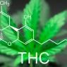What is Tetrahydrocannabinol (THC)?