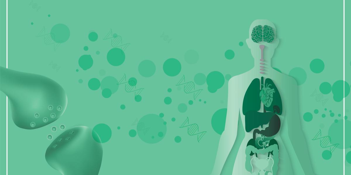 Endocannabinoid system (ECS)