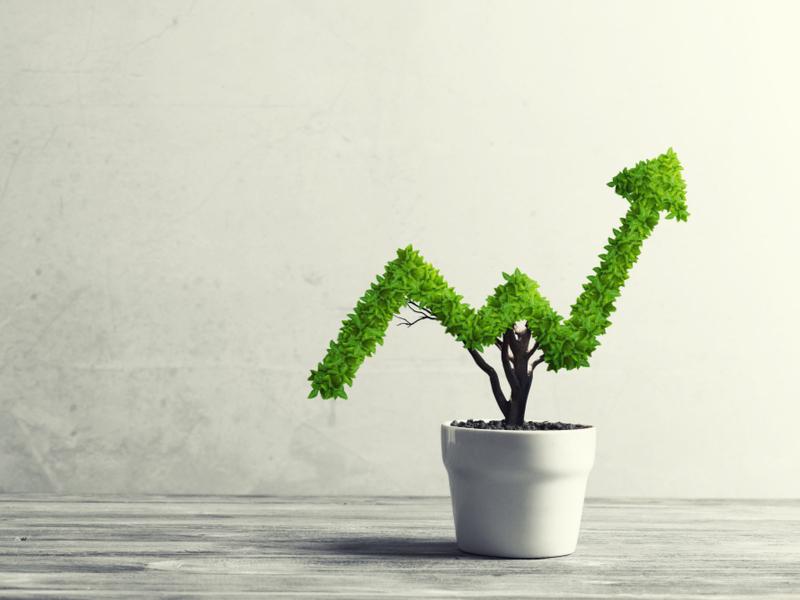 Growing CBD Industry