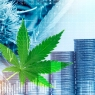 Why You Should Invest in CBD Stocks